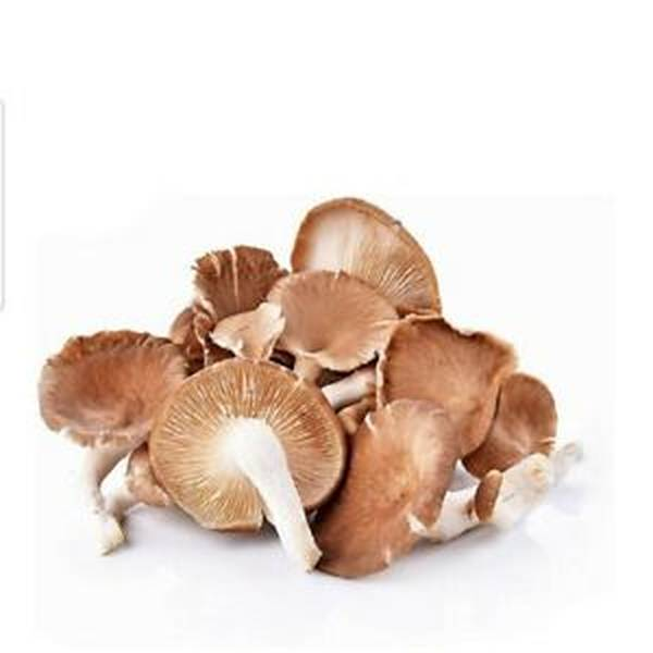Do mushrooms need liquid to cook for how to make liquid mushrooms | Check the Top 10