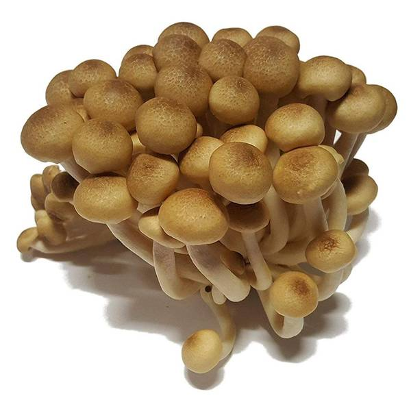Can i reuse liquid from lidia marinated mushroom and what liquid are mushroom spores mixed in for syringe Test, Advice, Review