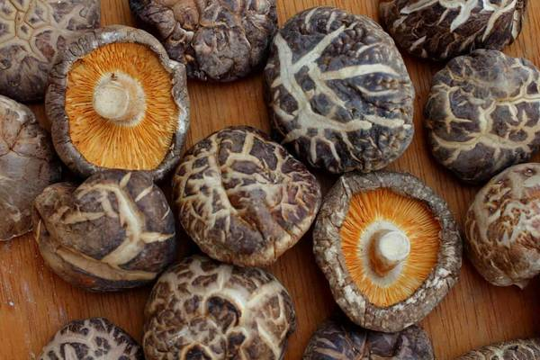 Are mushrooms that are turning liquid still hood and what to do with the soaking liquid of dried mushrooms Test, Advice, Review